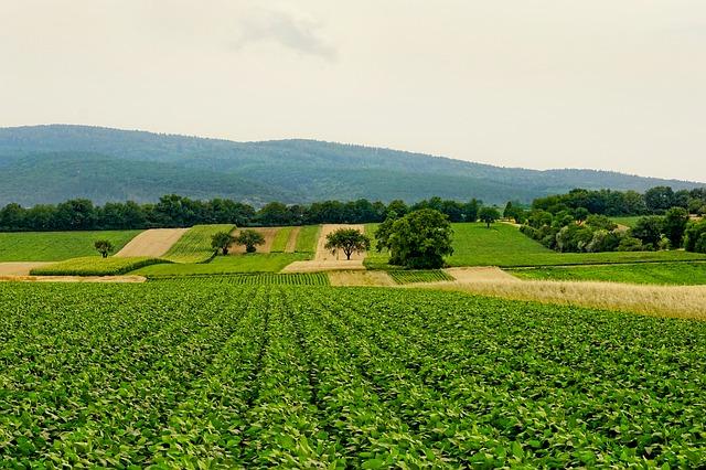 """Bando-""""ISMEA""""-misure-in-favore-del-autoimprenditorialità--in-agricoltura-e-del-ricambio-generazionale"""